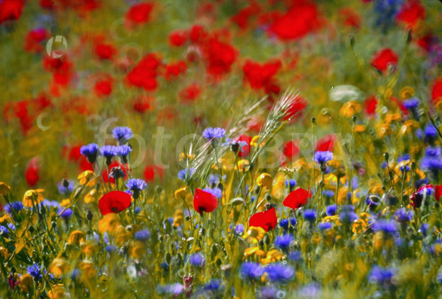 Bloom Where You are Planted (a Benediction) - Soul Shepherding