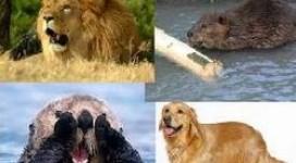 lion-beaver-otter-golden-retriever-personalities