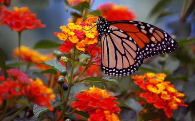 butterfly-on-flowers-count-your-blessings